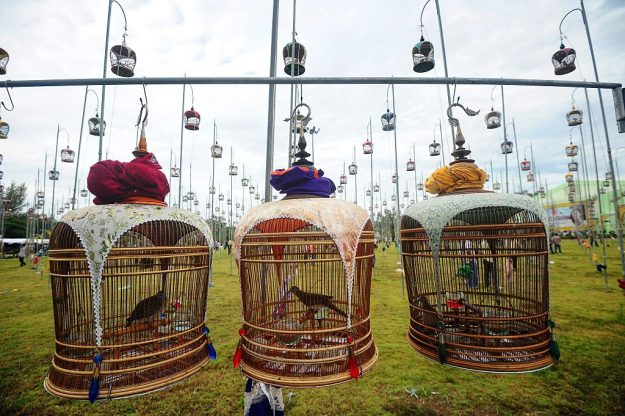 Birds sit in their cages during a bird-singing contest in Thailand's southern province of Narathiwat.