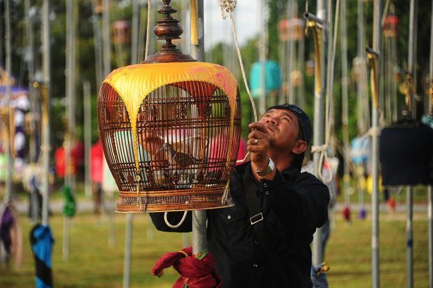 A man hoists a cage with a zebra dove during the bird-singing contest.