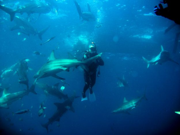 One of the adventures was shark diving off Aliwal Shoal in South Africa.