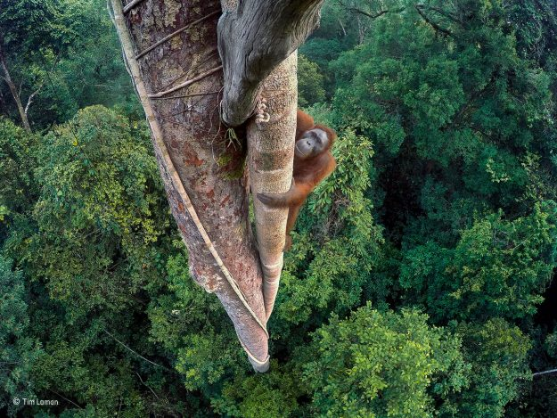 Entwined Lives, Winner of the Wildlife Photographer of the Year Competition.
