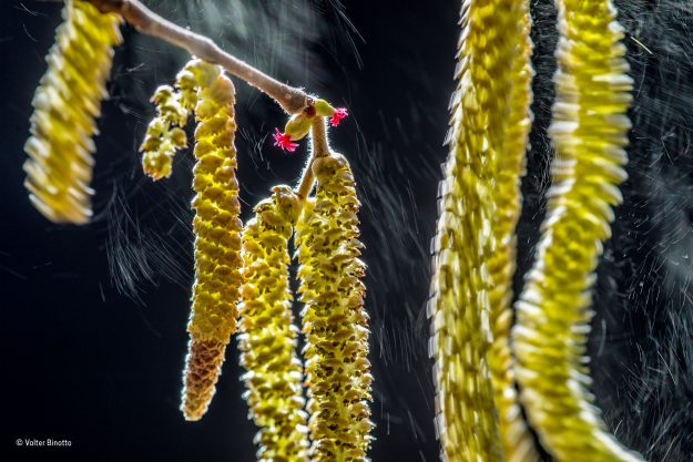 """""""Wind Composition"""", winner of the Plants and Fungi category."""