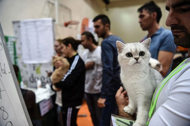 People wait in line for the jury to vet their cats at the contest.