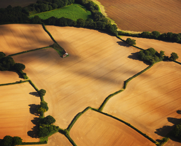 Irregularly shaped golden fields with a barn in Sussex.