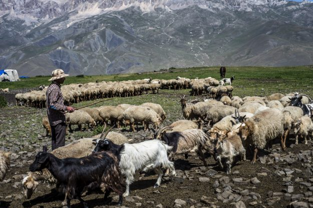 A shepherd counts sheep in the mountains near Khinalug village.