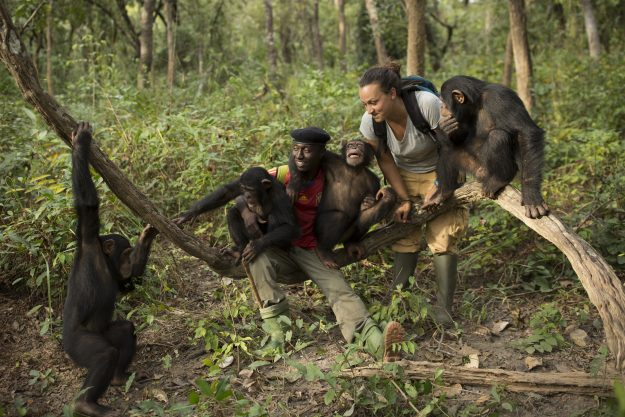 Volunteer Camille Le Maire, 27 from Nice in France and keeper Fayer Kourouma enjoy duties with the nursery group in the forest during a bushwalk at the Chimpanzee Conservation Centre in Guinea. Image: Dan Kitwood/Getty Images