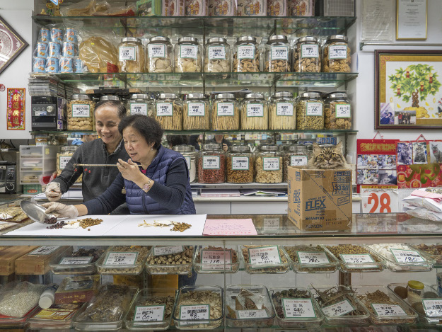 A series of photos features cats in shops in Hong Kong.