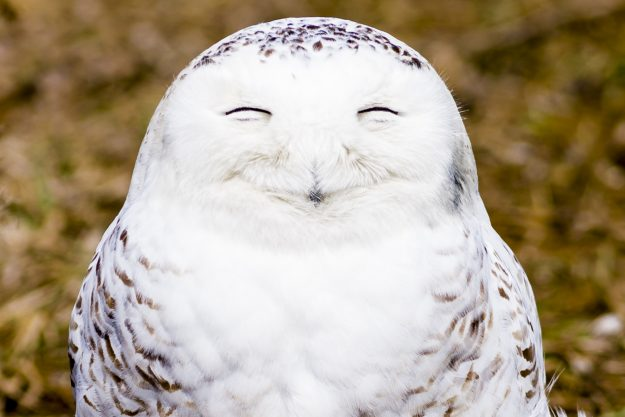 Now that's a happy owl.