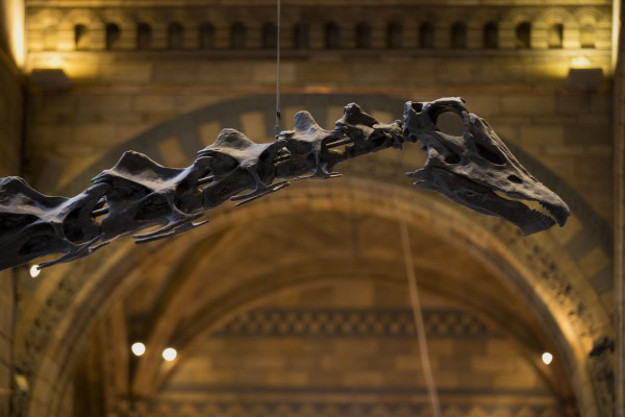 Dippy lived in North America over 150 million years ago.