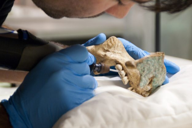 A Dutch museum has incorporated a fake Mixtec skull into its collection. Image: Museum Volkenkunde