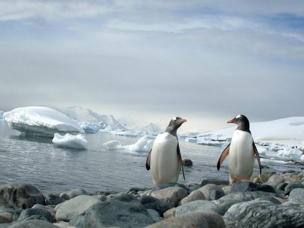 How to receive your very own antarctic christmas card for Can you go to antarctica