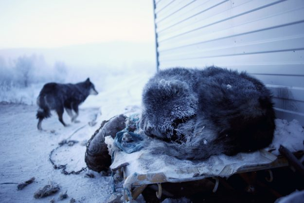 Dog sleeping in the carpark of Cafe Cuba, a petrol stop on the road between Yakutsk and Oymyakon.