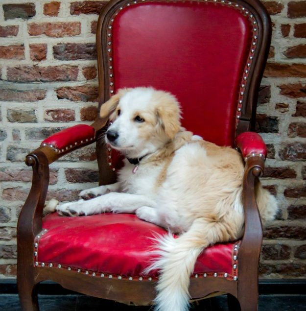 Le Waf is a French café where dogs and humans hang out. Image: Le Waf