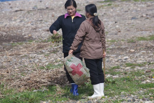 Women collect grass to eat later.