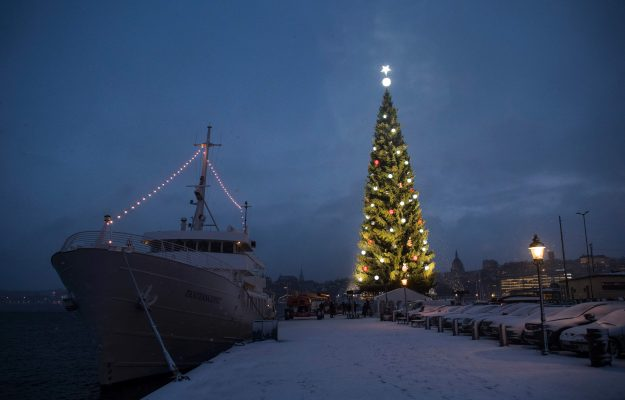 The lights of Stockholm's biggest Christmas tree being switched on for the first time this year.