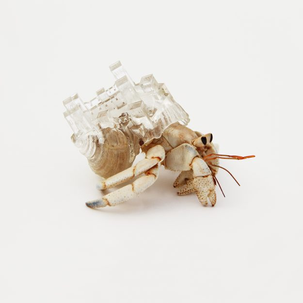 A hermit crab inside a shelter inspired by Morocco.