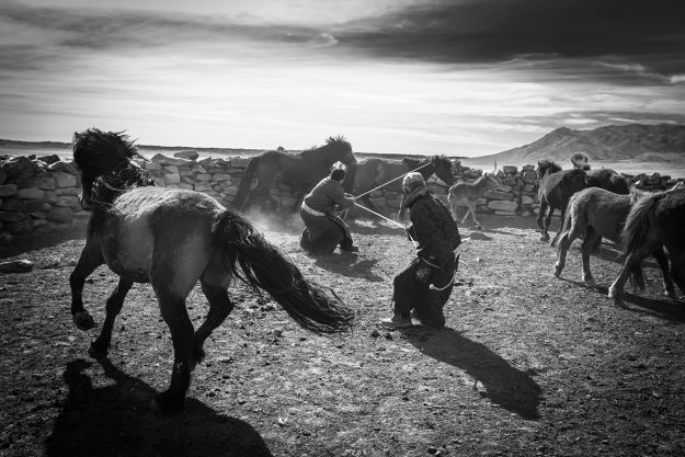 The Mongolian people learn to ride as very young children, and these horses are lassoed with great skill.