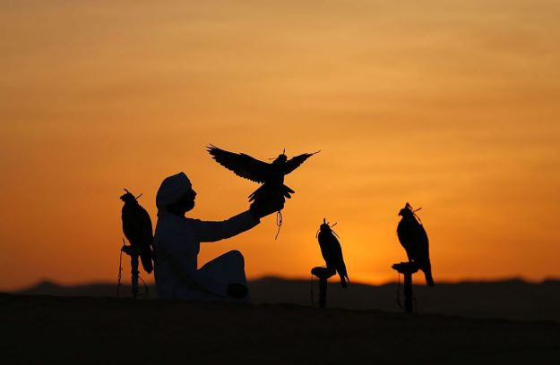 An Emirati from the Qubaisi tribe trains falcons in the Liwa desert.