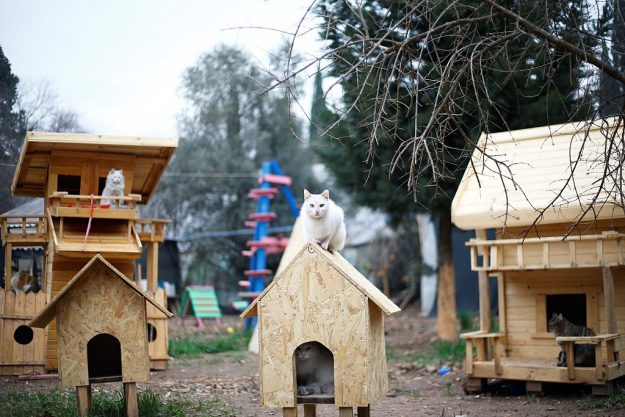 The cat village in Antalya, Turkey, has benches, villas and hammocks for approximately 100 cats. Image: Mustafa Ciftci/Anadolu Agency/Getty Images