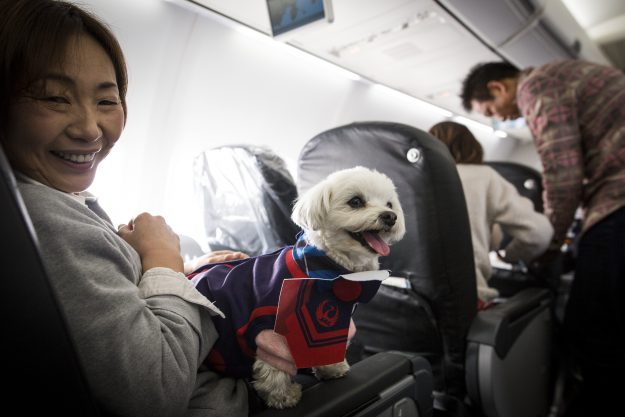 This airline allowed passengers to fly with their dogs for Airlines that allow dogs in cabin