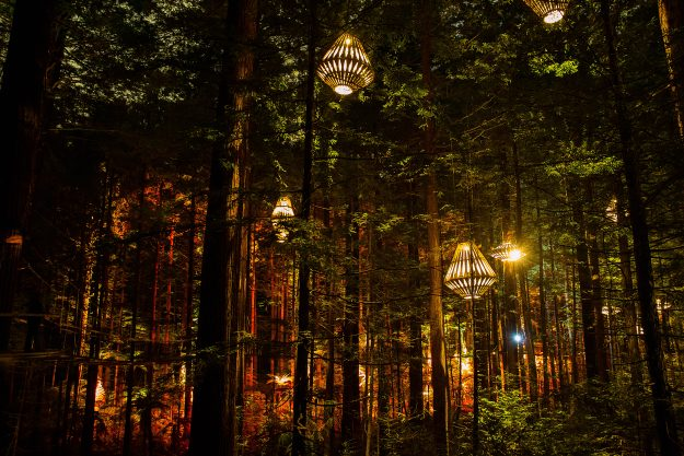 New Zealand's Redwood Forest has been lit up with a new nocturnal tourism experience called Redwoods Nightlights.Image: Redwoods Treewalk