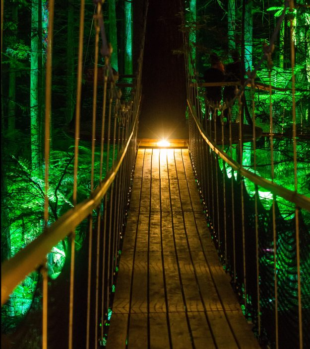 New Zealand's Redwood Forest has been lit up with a new nocturnal tourism experience called Redwoods Nightlights. Image: Tourism Media