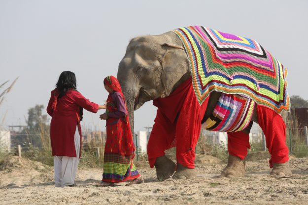 Suzy, the elephant sports one of the colourful elephant jumpers.