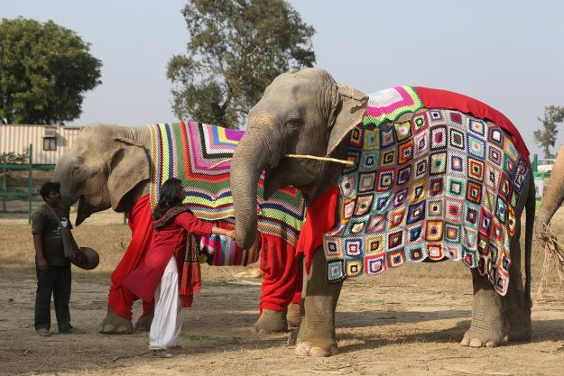 Suzy, (front) Phoolkali and Laxmi (rear) show off their new clothes.