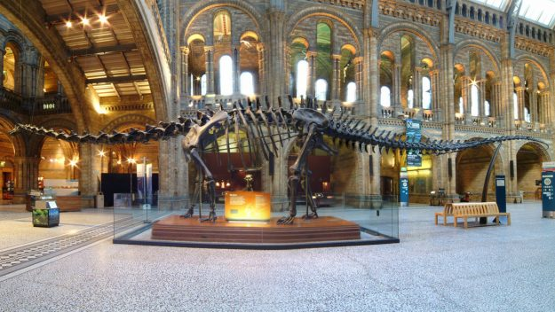 Dippy the iconic museum dinosaur is embarking on a British tour. Image: The Trustees of the Natural History Museum, London