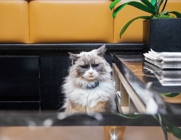 Cats are a part of many shops in New York.