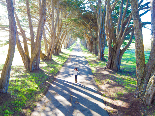 The morning sun casts ominous shadows among a cypress tree tunnel.