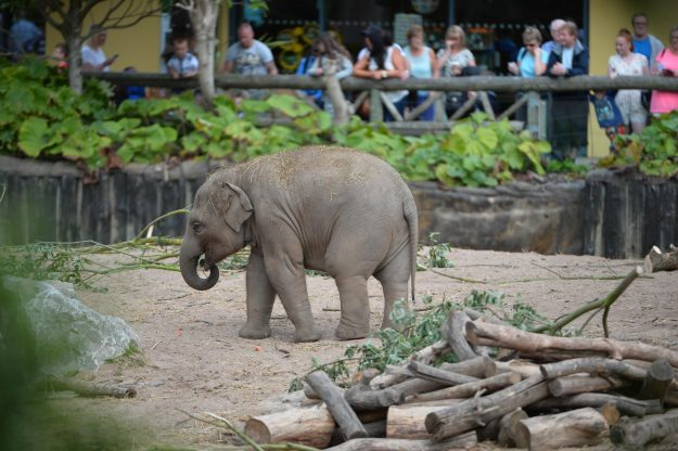 Chester Zoo came in at number12 in the top UK visitor attractions. Image: ALVA