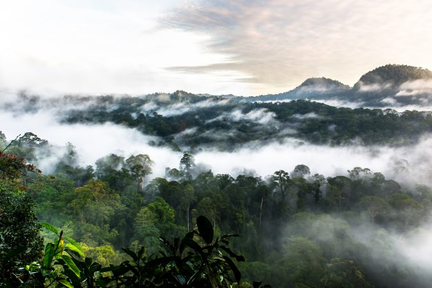 Shot of the morning mist in Borneo's Danum Valley rainforest canopy just after sunrise.