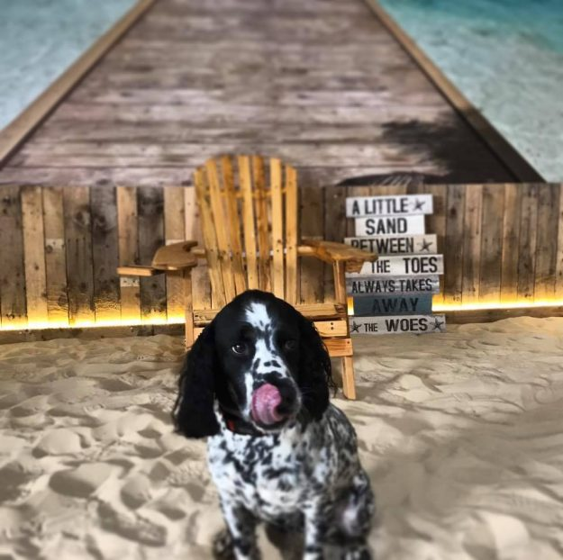 The Beach Dog Café has opened in Manchester: Image Manchester Dog Care