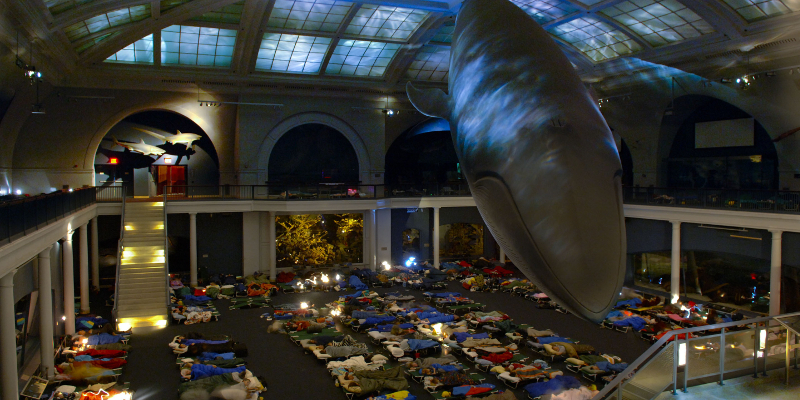 Spend a night at the American Museum of Natural History in NYC