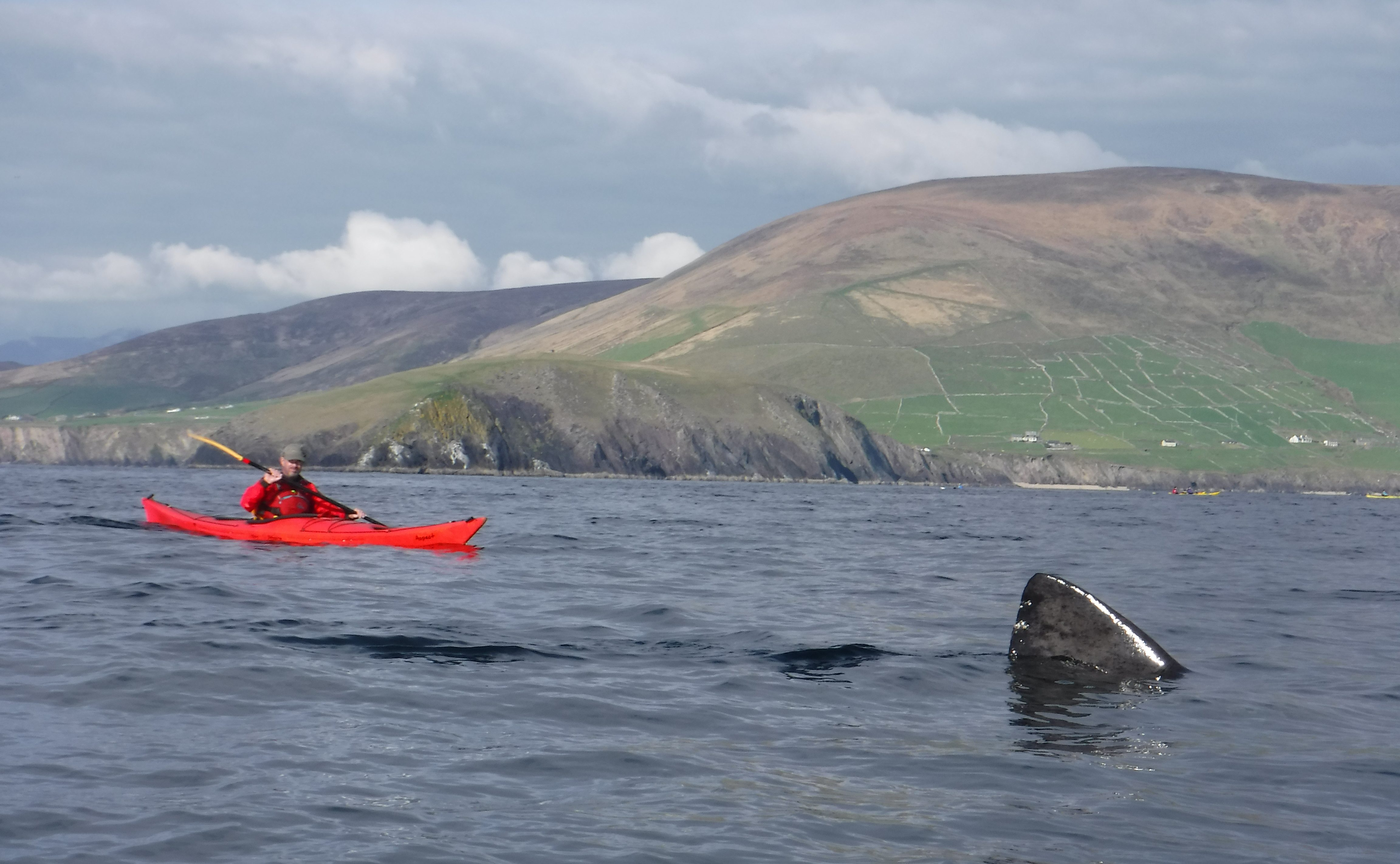 Kayakers came across a school of basking sharks near the Blasket Islands in Kerry. Image: Irish Adventures