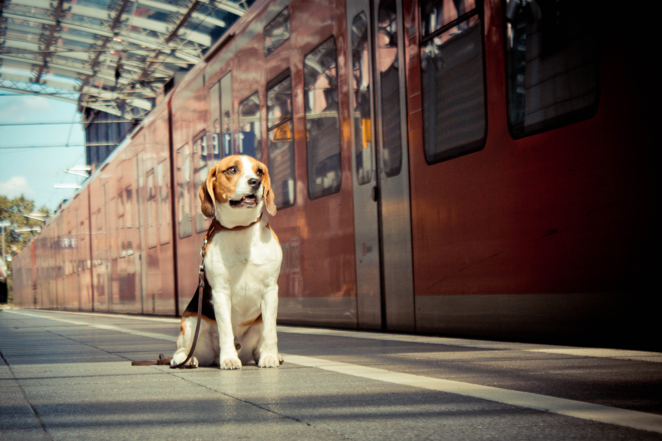 Dogs can now ride public transport in Paris. Image: Benita Hartmann - Tierfotografie