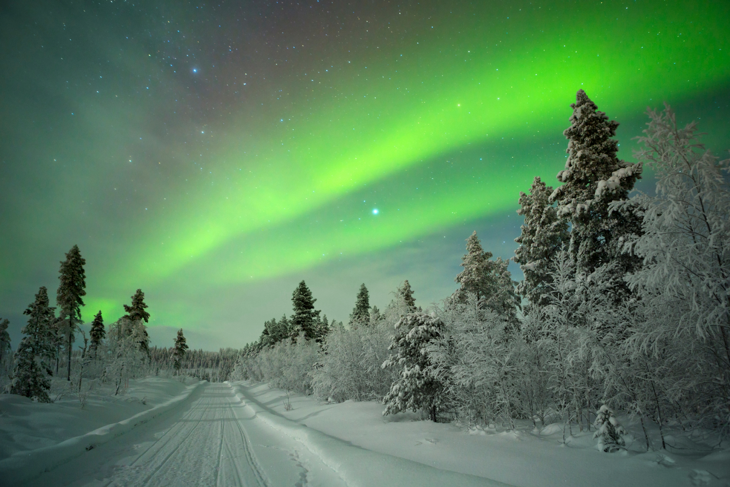 Aurora borealis over a track through winter landscape in a Finnish Lapland. Image: Sara Winter/Getty Images