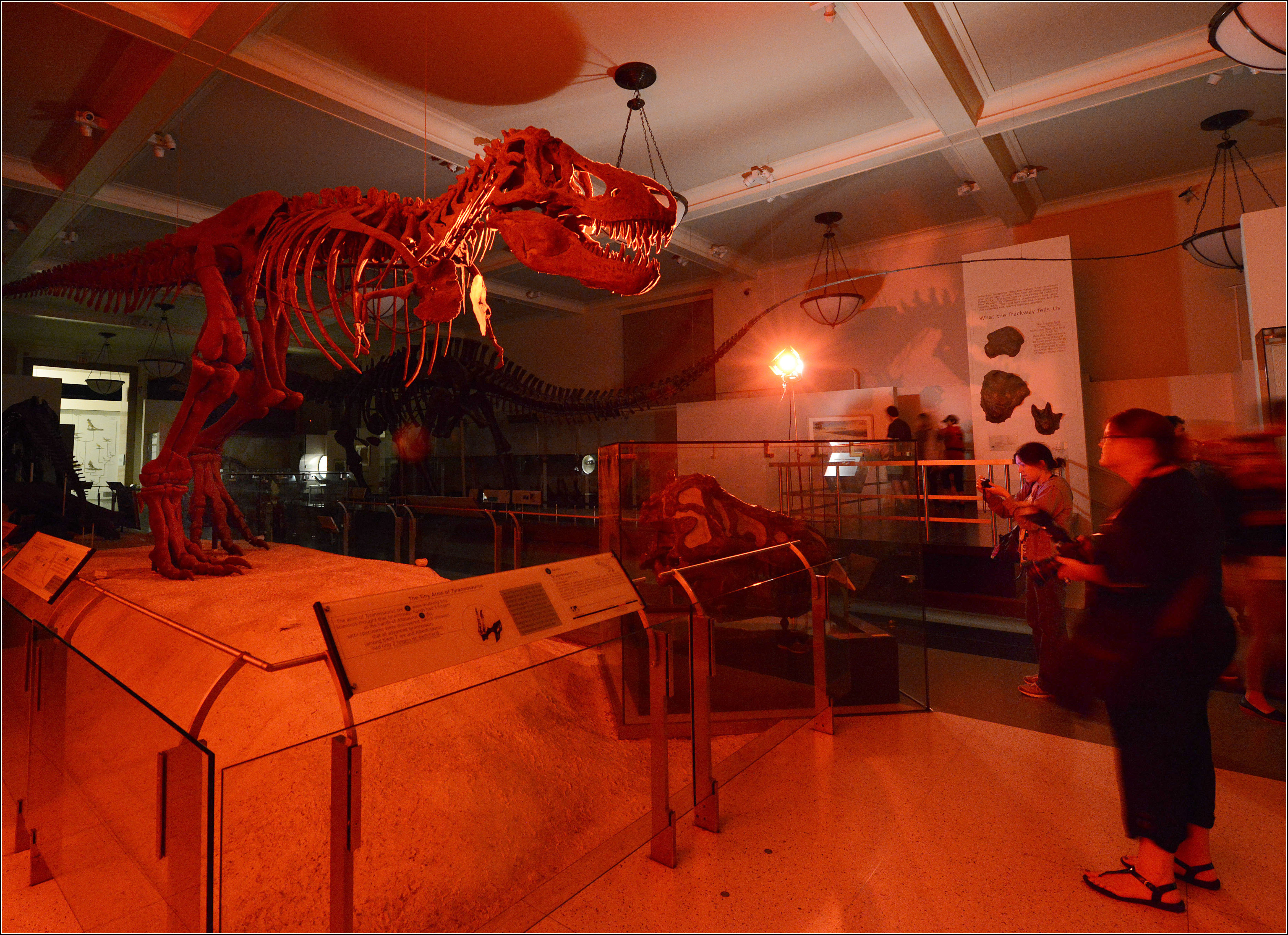 """Adults can spend a """"night at the museum"""" in New York."""