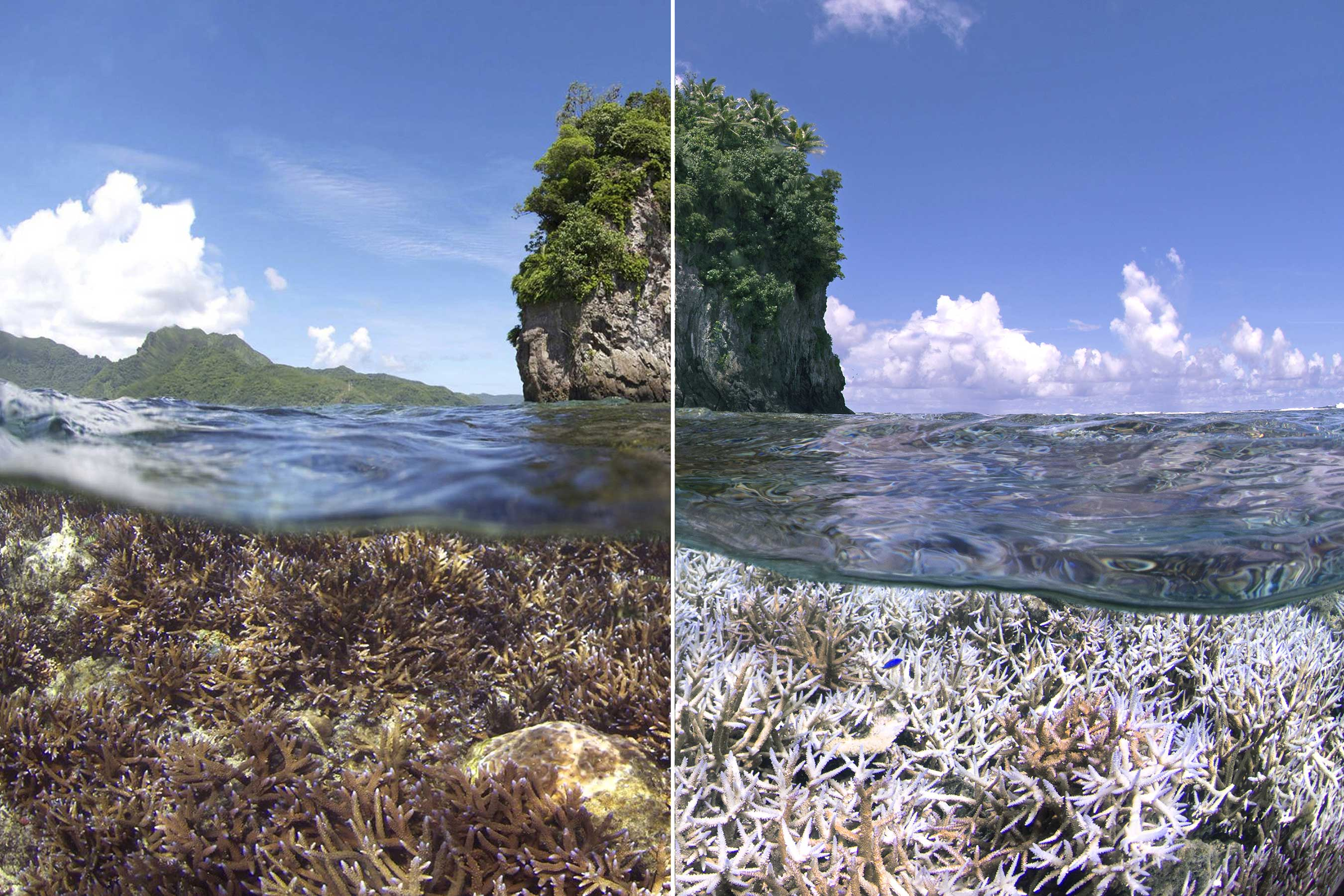 A before and after image of the coral bleaching in American Samoa. The first image was taken in December 2014. The second image was taken in February 2015.