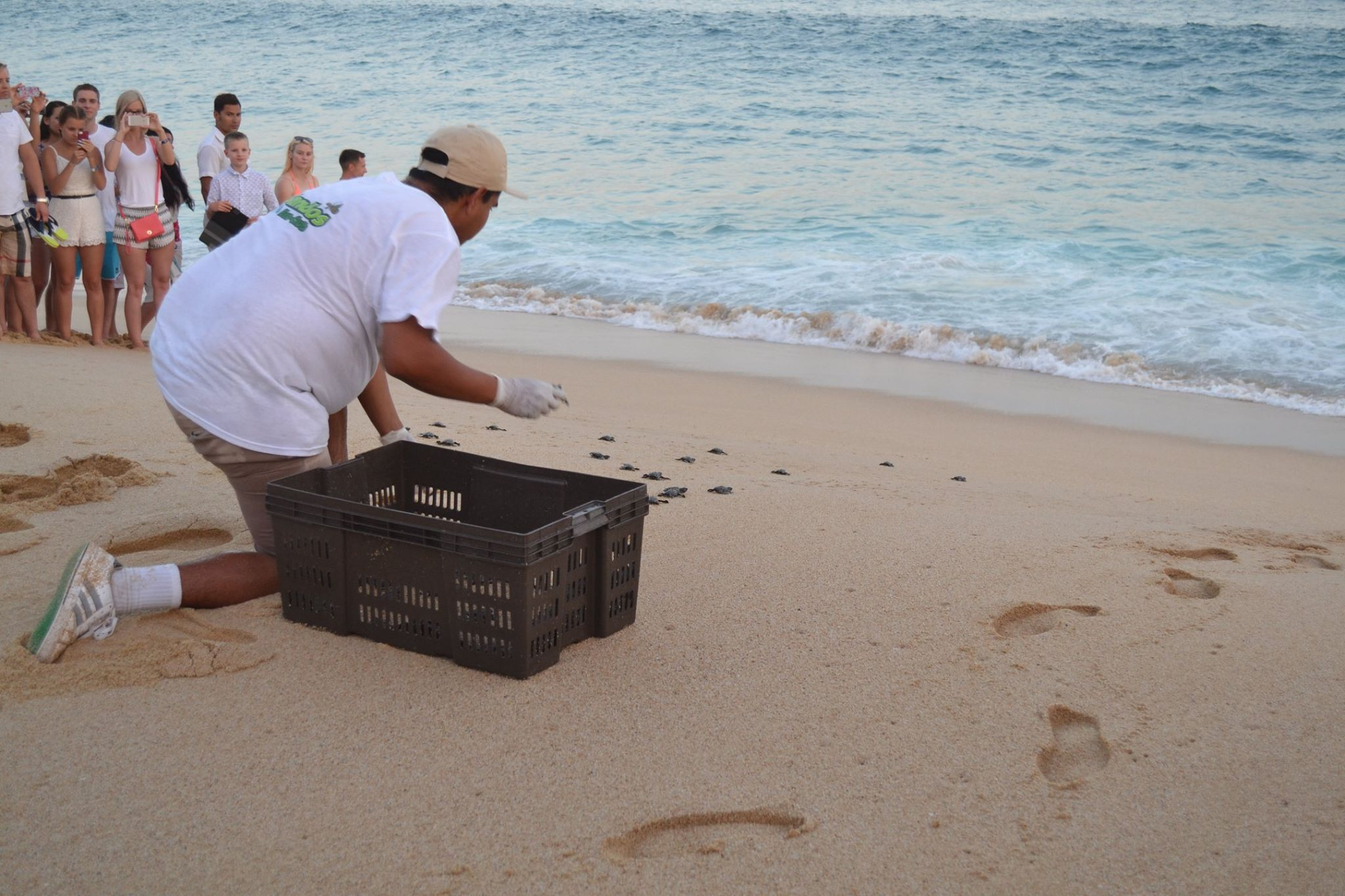 Baby sea turtle release Cancun resort