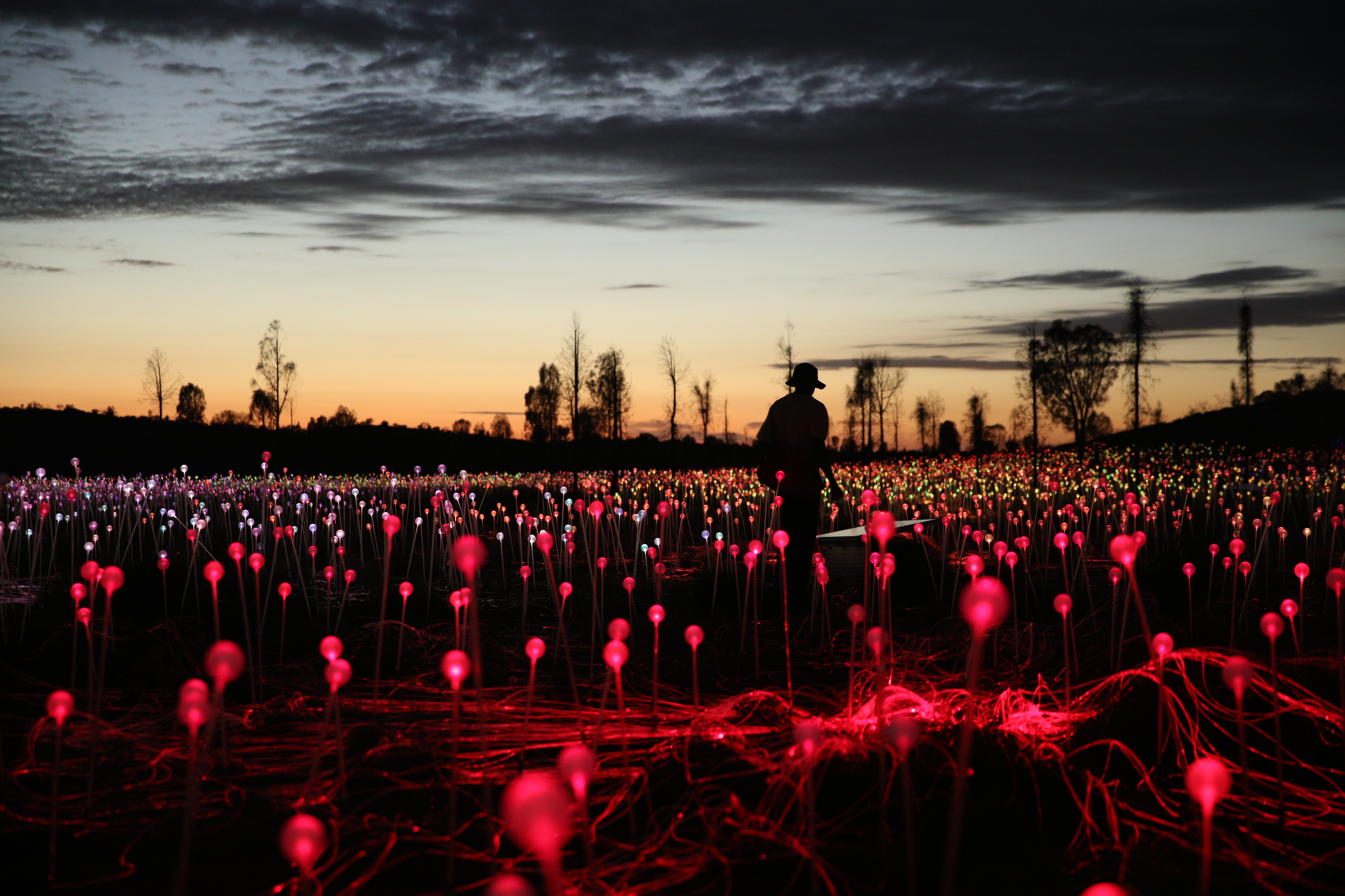 Silhouettes and red stems. Field of Light, Uluru, Bruce Munro 2016 Photo by: Mark Pickthall