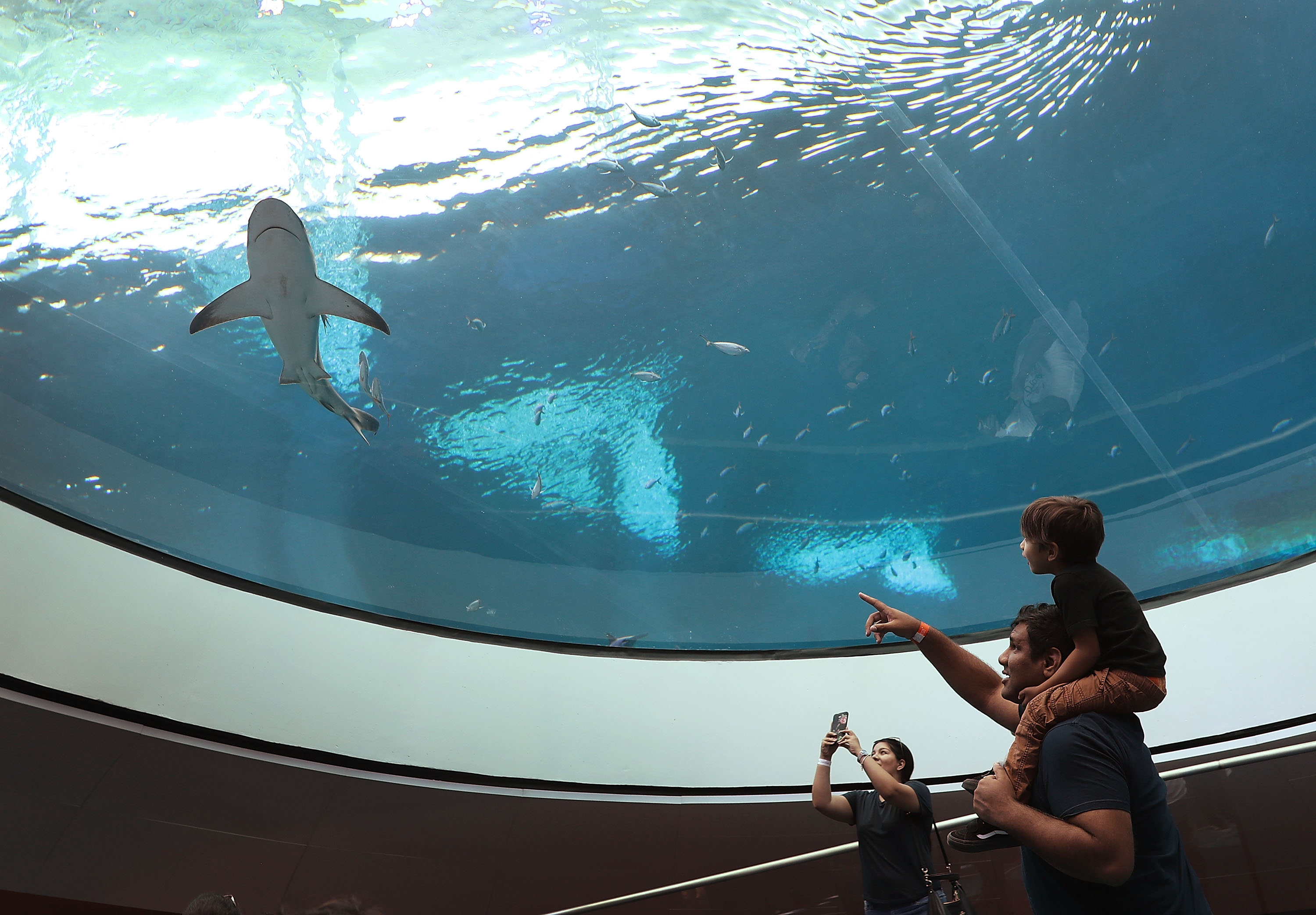 A family watching a shark at the gulf stream habitat at the frost museum of science in Miami.