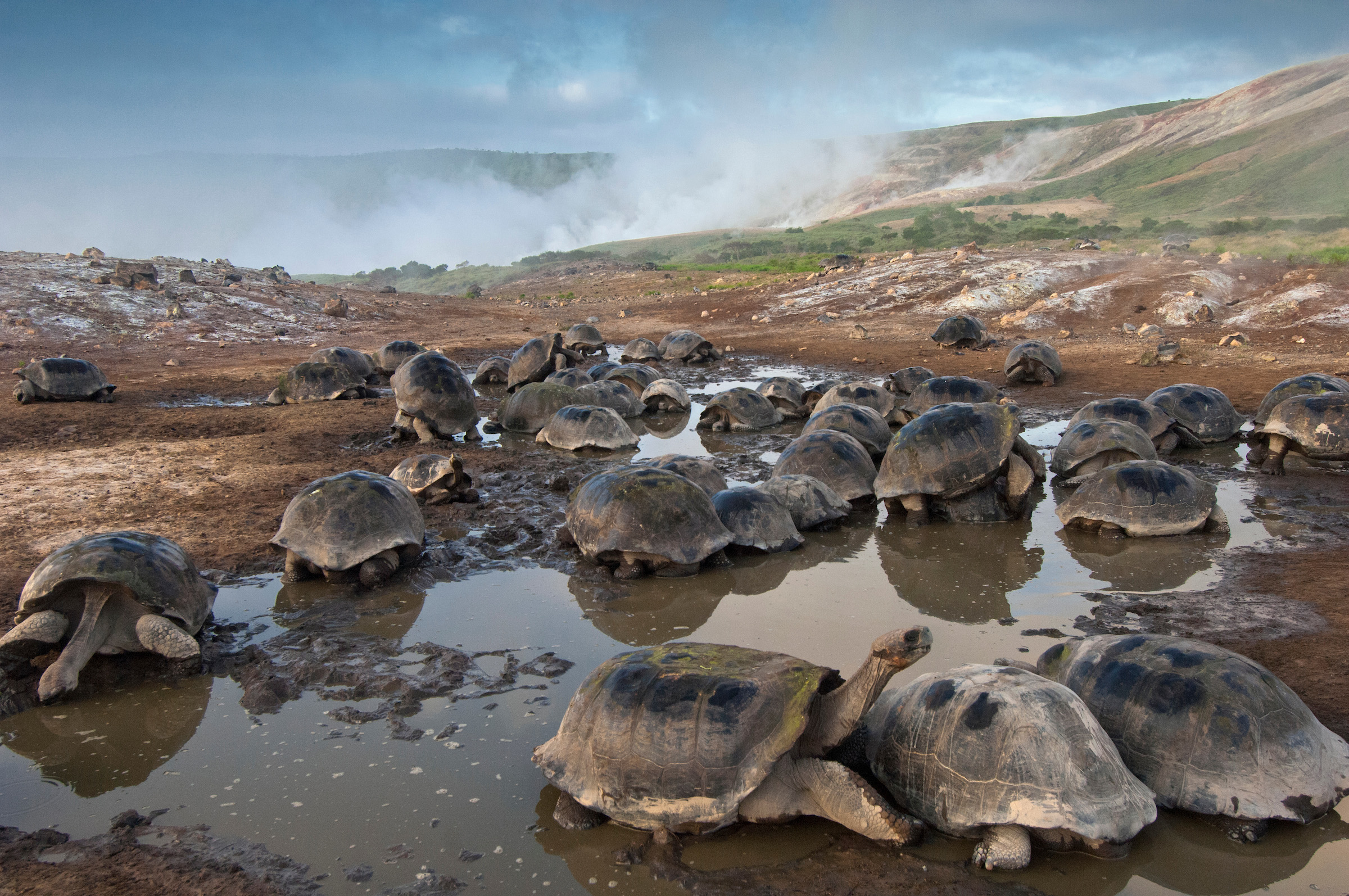 The massive tortoises are an incredible sight for visitors.