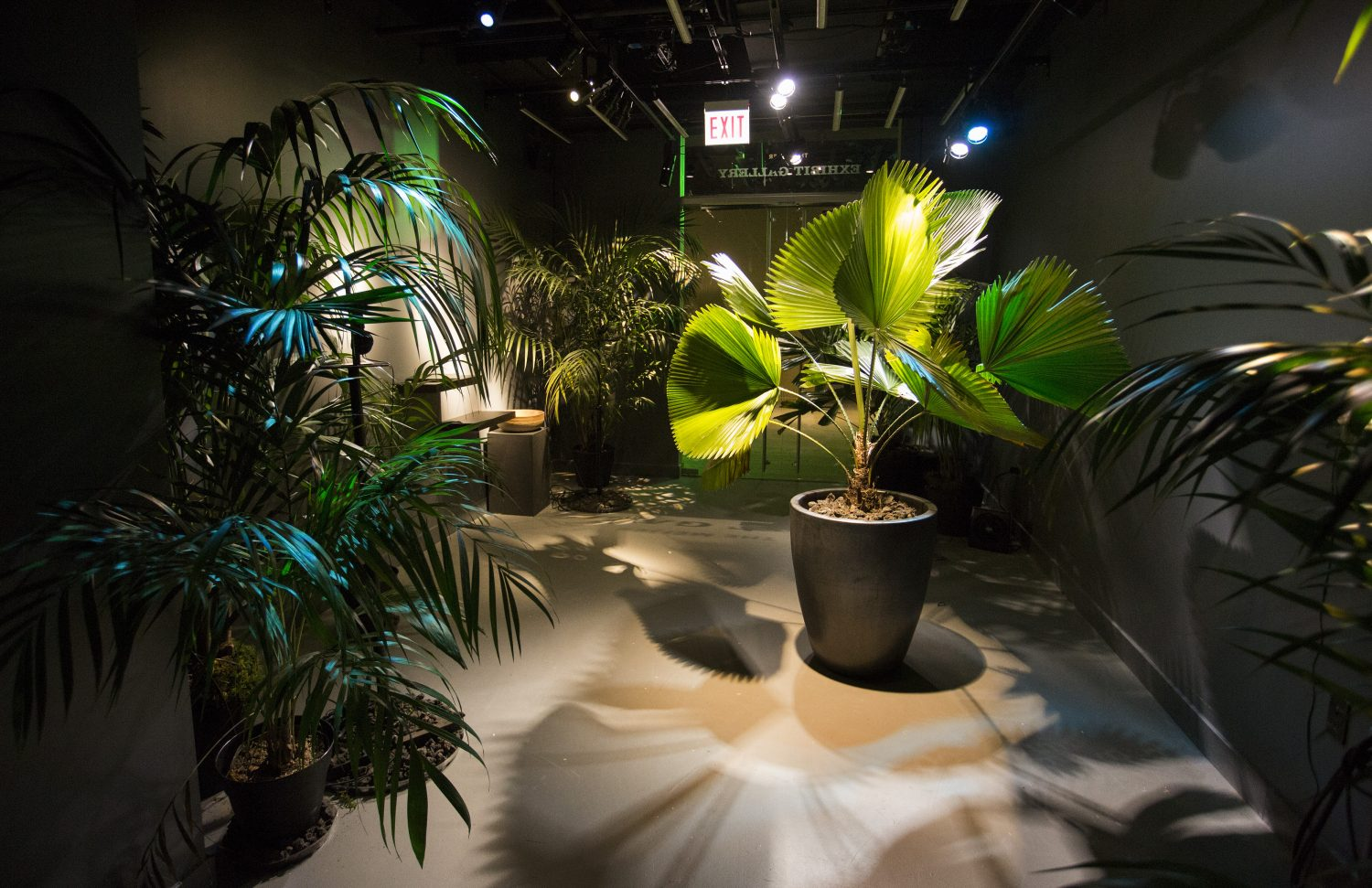 Palm: All Awake in the Darkness is an exhibition at the American Writers Museum. Image: American Writers Museum