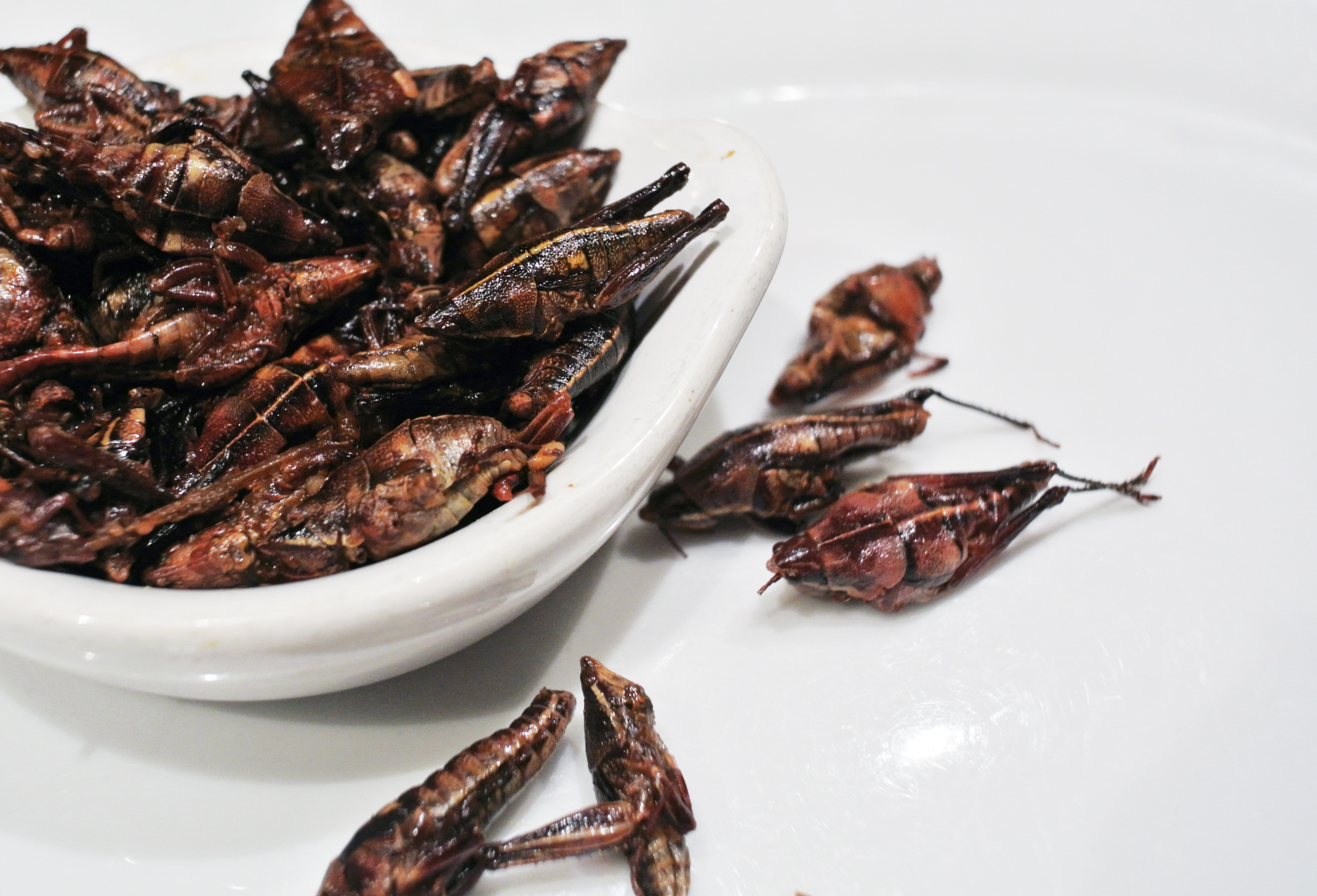 A bowl of grasshoppers