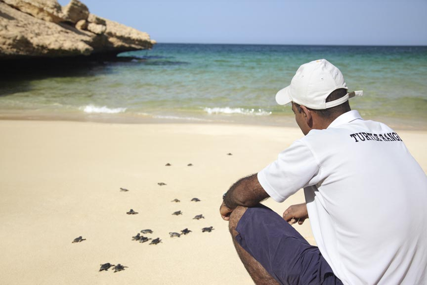 Turtle ranger Mohamed on the beach with the turtles.