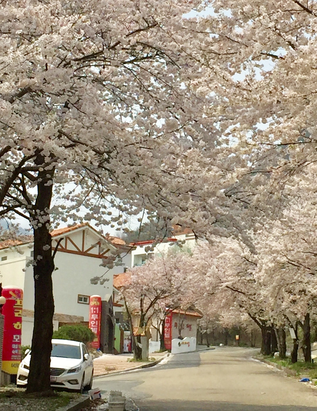 The entrance to this muintel surrounded by blossom trees.