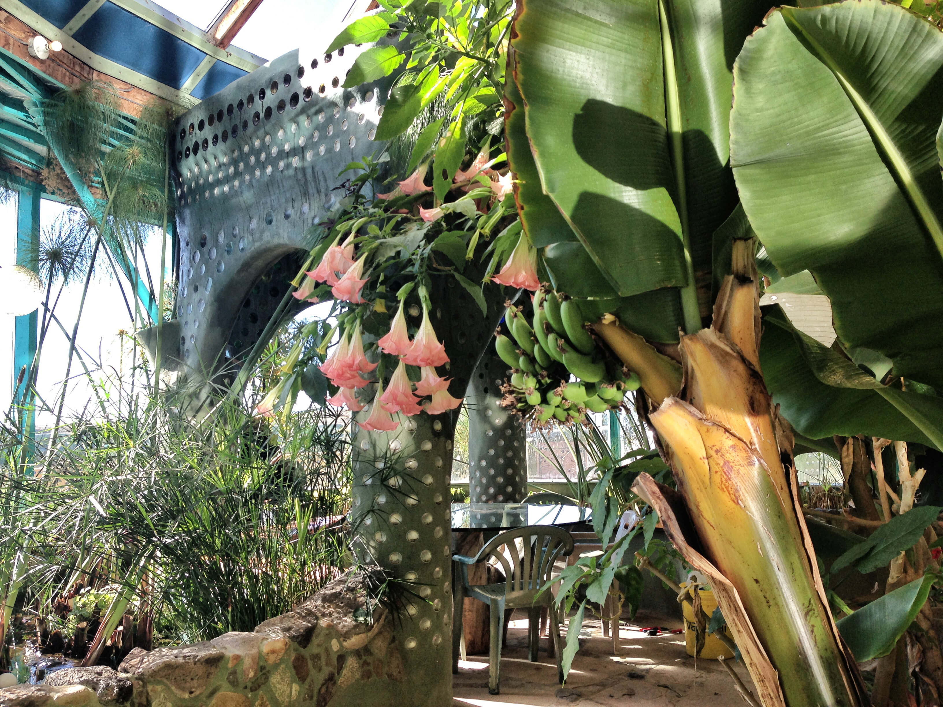Flowers and bananas grow in the greenhouse of the Phoenix earthship.