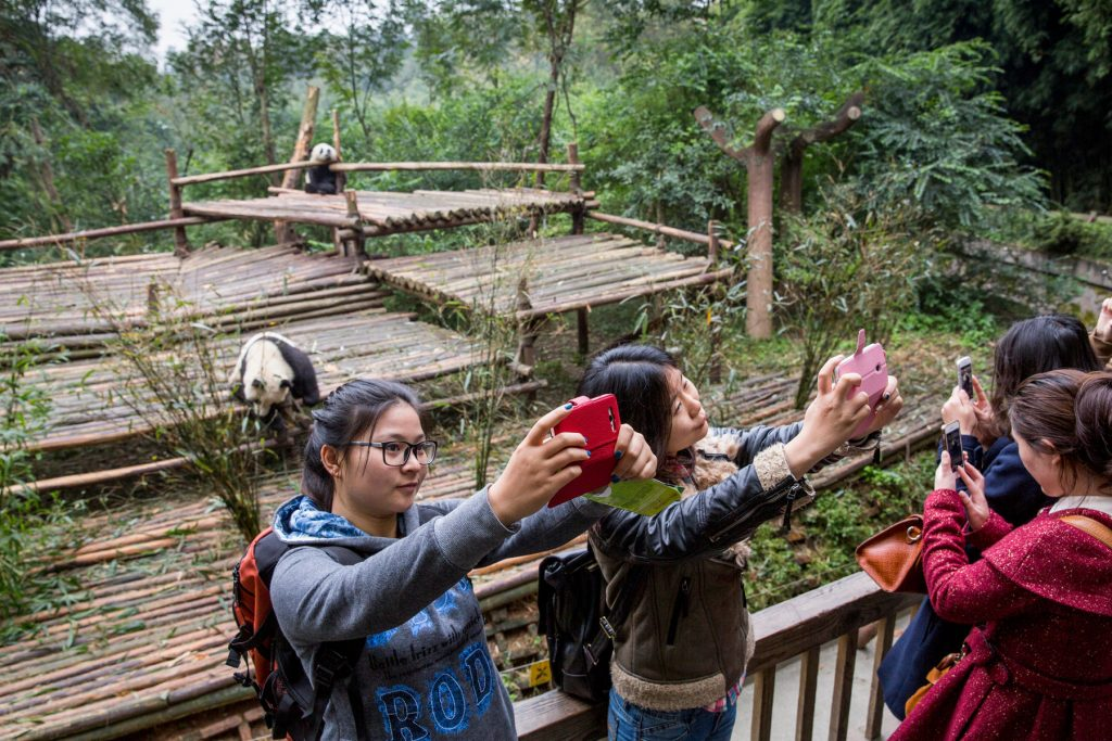ourists take self-portraits while standing in front of Giant Panda Bears sitting in enclosure at Chengdu Research Base of Giant Panda Breeding