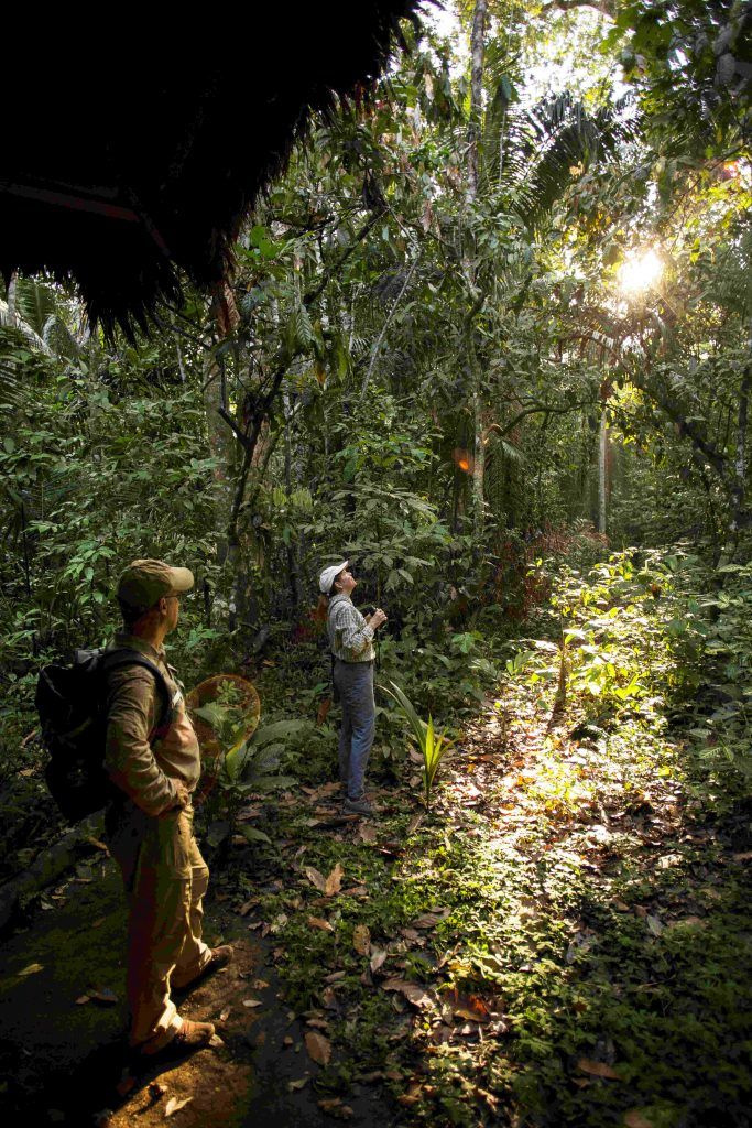 Explore the Peruvian rainforest in the Amazon Basin. Image by Inkaterra